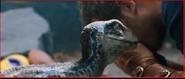 Empatia de Blue (Velociraptor)