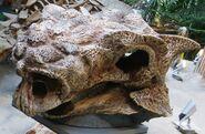 サイカニア 化石