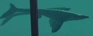 JWE2 undentified mosasaur