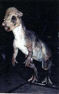 Pachycephalosaur animatoric
