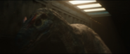 Allosaurus Shipped2