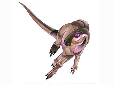 Orodromeus