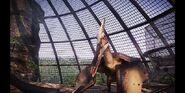 Pteranodon jwe 2