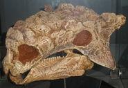 タルキア 化石
