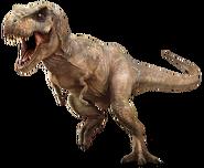 Tyrannosaurus-rex-info-graphic