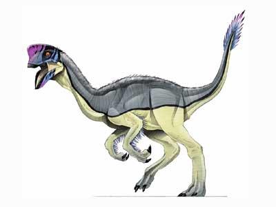Oviraptor Jurassic Park Wiki Fandom What does a oviraptor eat? oviraptor jurassic park wiki fandom