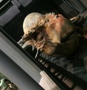 Stygimoloch-jurassic-world-leaked-photo-ian-maclom