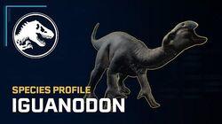 Species Profile - Iguanodon