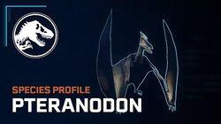 Species Profile - Pteranodon
