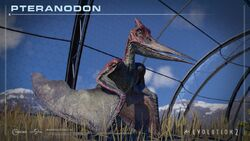 Pteranodon sitting