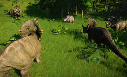 SinoceratopsGroup