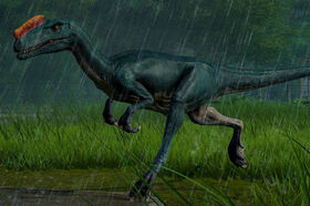 JWEProceratosaurus
