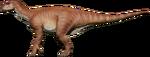 IguanJungle
