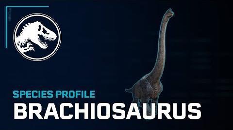Species Profile - Brachiosaurus