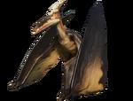 PteraNull