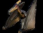 PteraJungle
