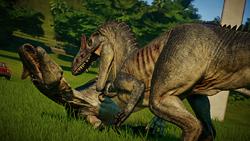 AllosaurusFight