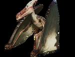 PteraAlpine