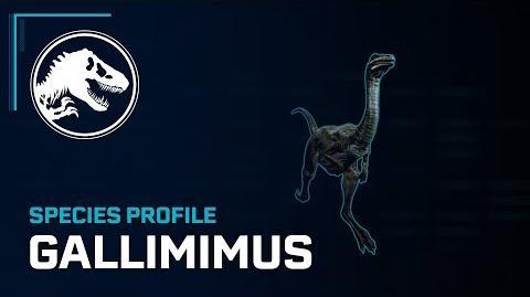 Species Profile - Gallimimus