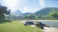 Acrocanthosaurus sleeping