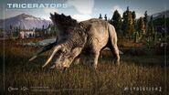 Triceratops jwe2