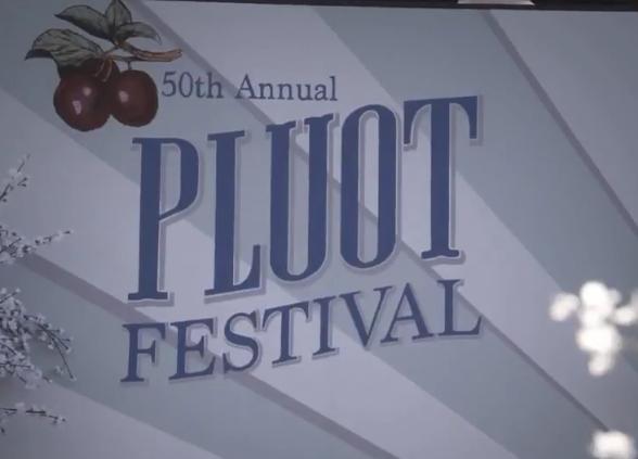 Pluot Festival