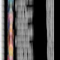 Wdf tournament rank blur