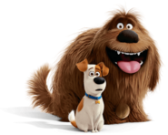 Max and duke pets