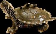 Giant Mississmud turtle