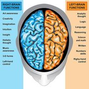 Brain R and L.jpg
