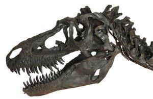 Gorgosaurus-3.jpg