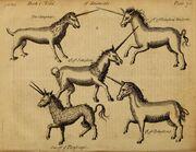 Pierre Pomet Complete History of Drugs unicorns.jpg