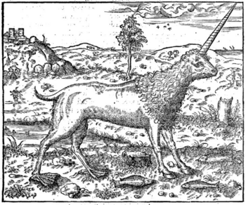 Image of Camphruch