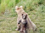 435 Holly and spring cub June 30, 2020 NPS photo by Ranger Naomi Boak (aka NSBoak) .02