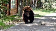 151 Walker June 2, 2021 NPS photo by Ranger Naomi Boak (aka NSBoak) .02