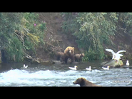 505 PIC 2018.08.06 w 2 SPRING CUBS GOLDILOCKS POSTED 2019.06.05 16.34 04