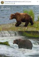 2014 FAT BEAR TUESDAY 2014.09.30 11.30 KNP&P FB POST 747 2014.06.25 vs 2014.09.10