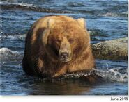 89 Backpack June 2019 NPS photo 2021 Bears of Brooks book page 63