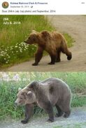 2014 FAT BEAR TUESDAY 2014.09.30 08.30 KNP&P FB POST 284 2014.07.06 vs 2014.09.06