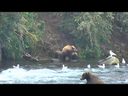 505 PIC 2018.08.06 w 2 SPRING CUBS GOLDILOCKS POSTED 2019.06.05 16.34 05