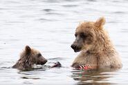 435 and spring cub Jul 17, 2020 photo by Lee Pastewka (aka RiverPA) .09