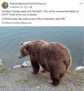2014 FAT BEAR TUESDAY 2014.09.29 18.08 KNP&P FB POST w PEEK AT 402