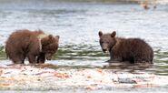803's 2 spring cubs July 17, 2020 photo by Lee Pastewka (aka RiverPA) .04