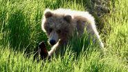 1 of 128 Grazer's 2 yearlings June 7, 2021 NPS photo by Ranger Naomi Boak (aka NSBoak)