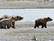 719 and her 2 yearlings June 15, 2020 NPS photo by N. Boak .03