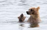 435 and spring cub Jul 17, 2020 photo by Lee Pastewka (aka RiverPA) .04