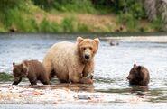 803 and 2 spring cubs July 17, 2020 photo by Lee Pastewka (aka RiverPA) .06