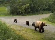 132 and 3 spring cubs July 7, 2021 snapshot by Grandmaj .02