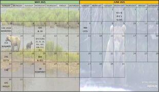 2021 BEAR A DAY CALENDAR w YEAR 03 MAY & JUNE SNIP 01