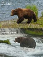 2014 FAT BEAR TUESDAY 2014.09.30 11.30 KNP&P FB POST 747 2014.06.25 vs 2014.09.10 PHOTOS ONLY